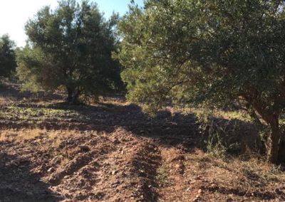 oliveraie03