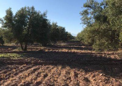 oliveraie04